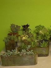 HD Expo Flowers,succulents for trade show booths at Hospitality Design Expo