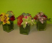 Kokedema succuleOrchids for your convention booth display