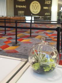 Glass globe with airplant perfect in muliples at convention